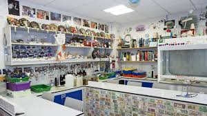 Kitchen Collection Outlet Store by Life On Campus Cats Preparing You For University Success