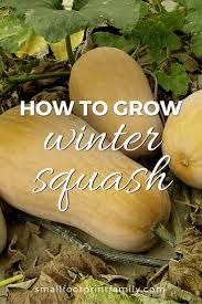 how to grow winter squash small footprint family