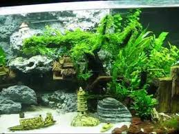 Aquascape Moss Aquascape Beautiful Moss Tree My Beauty Youtube