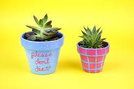 cute plant plant and paint cute succulents craftjam