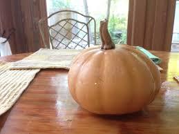 grow seminole pumpkin a florida native tallahassee com
