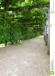 Grape Vine Pergola by Pathway Through Grapevine Covered Pergola At Chateau De