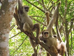 monkeys to the rescue discovermagazine com