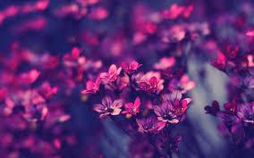 free wallpaper little purple flowers nature download mobile
