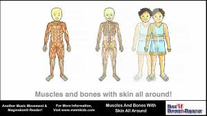Anatomy Of Human Body Bones Muscles And Bones With Skin All Around Youtube