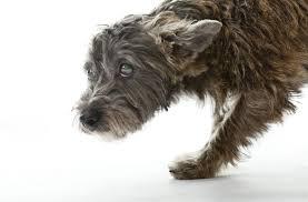 understanding seizures and brain diseases in dogs
