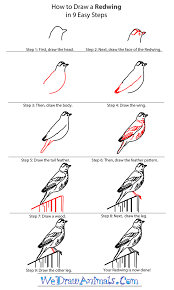 how to draw a redwing