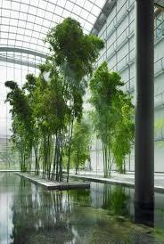 266 best paisa jardines interiores images on pinterest