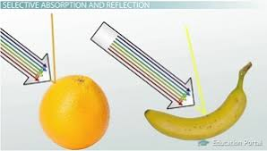 Visible Light Examples Color White Light Reflection U0026 Absorption Video U0026 Lesson