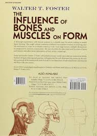 Artistic Features The Influence Of Bones And Muscles On Form Dover Anatomy For