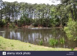 Botanical Gardens South Carolina Duck Pond South Carolina Botanical Gardens Clemson South