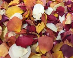 Real Rose Petals Flower Petals