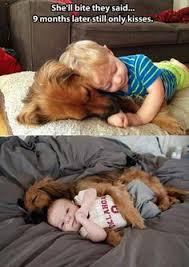 boxer dog meme boxer kisses get u0027em while their 25 cents cisco kid