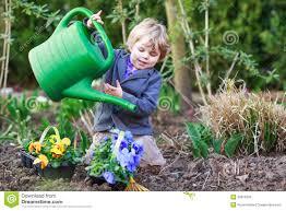 flowers in garden images little boy gardening and planting flowers in garden stock photo