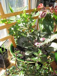 Plant Trellis Lasalle Garden