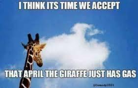 Meme Giraffe - 17 best april the giraffe memes that ask is april still pregnant
