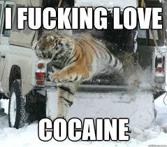 Cat Cocaine Meme - image 670889 cocaine bear know your meme