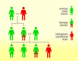Pedigree Chart For Color Blindness What Is Color Blindness Colblindor