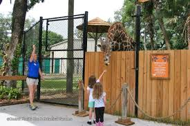 what to do in orlando by alphabetical order orlando attractions a z