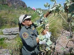 native plants australia national parks are vital for protecting australia u0027s endangered