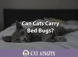 Bed Bugs On Cats Can Cats Carry Bed Bugs Cat Kingpin