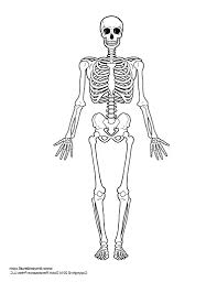 Printable Halloween Skeleton Simple Skeleton Drawing How To Draw A Skeleton Step Step Halloween