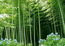 20 bamboo seeds ornamental and edible plant rich in