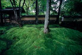 Japan Rock Garden by Google Image Result For Http Www Michaelyamashita Com Gallery
