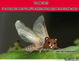Moth Meme - dirty moth by darkesthorizon meme center