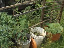 Trellis For Cucumbers In Pots Buttercup Squash Cucumber Trellis Pumpkin U0026 Melon Hugelkultur