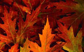 classy halloween background free hd fall wallpapers pixelstalk net