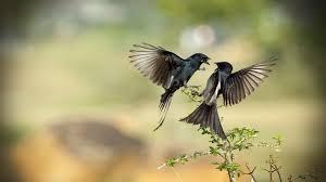 hd picture of birds wallpaper hd