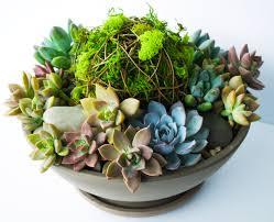 diy vibrant succulent planter planters cacti and plants