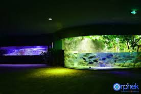 portfolio u2022 orphek aquarium led lighting