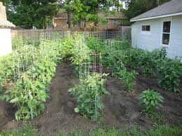 outdoor and patio beautiful backyard vegetable garden with wooden
