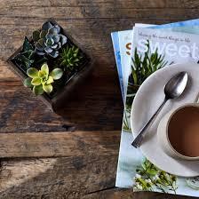 diy mini succulent garden on food52