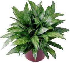 funeral plants lawton ok florist flower delivery to lawton fort sill s