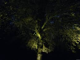 Outdoor Up Lighting For Trees Portland Landscapers Offer Unique Lighting Ideas For Outdoor