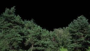high quality 10bit footage of trees in motion without destructive