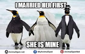 Funny Penguin Memes - penguin memes