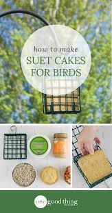 how to make homemade suet cakes to attract birds one good thing