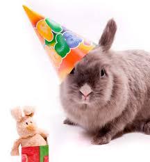 rabbit birthday happy birthday bunny rabbit with hat jpeg 593 640 bunnies