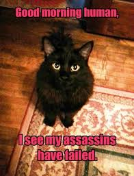 Good Morning Cat Meme - lolcats good morning lol at funny cat memes funny cat pictures