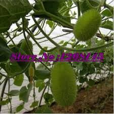 compare prices on cucumber origin shopping buy low price