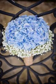 wedding flowers queanbeyan 45 best wedding flowers images on blue hydrangea