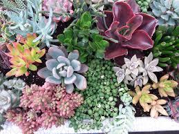 Rock Garden Perennials by March 2016 Wigplants U2013 Western Independent Greenhouses