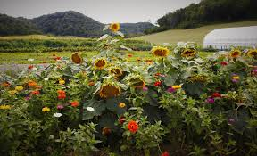 suncrest gardens farm eat well smile often