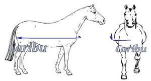 Rug Measurement Horse Rug Online Size Guide Caribu Horse Wear