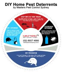 how to get rid of rats diy pest control masters pest control sydney