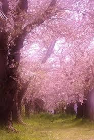24 best seasons beautiful trees images on beautiful